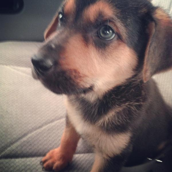 How Will My Dog Look