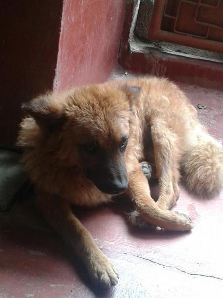 Identify Dog Breeds Worksheet To Download Identify Dog Breeds | Dog ...