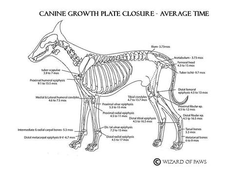 growth plate closure chart