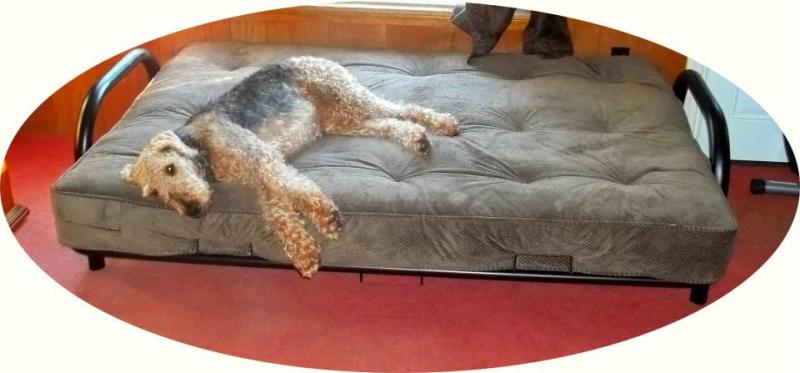 xl dog bed