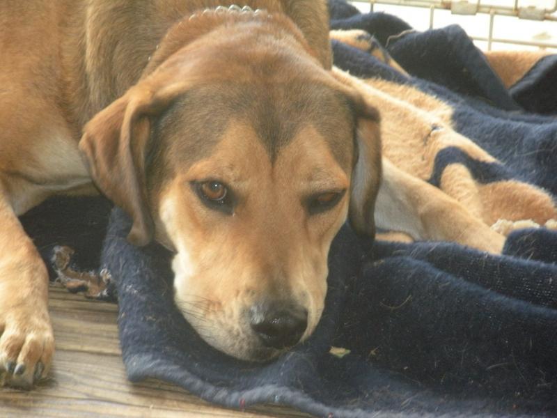 Dog Breeds With A Widows Peak