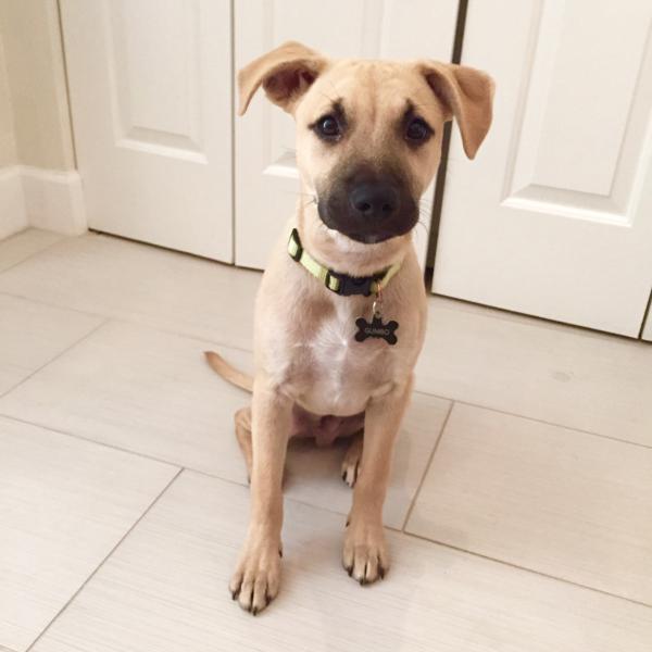 Cool Mouth Cur Black Adorable Dog - 142418d1426816124-my-pup-black-mouth-cur-shepherd-fullsizerender-3  Photograph_223295  .jpg