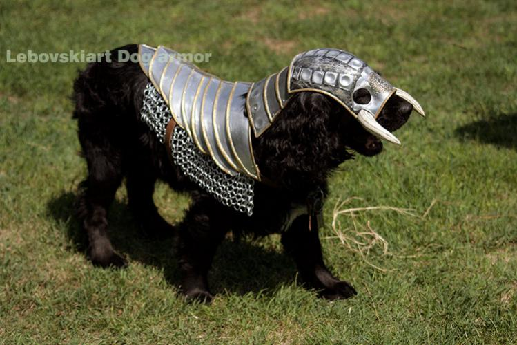 The Knights Dog