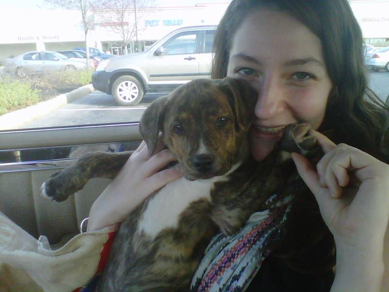 Boxer Bloodhound Mix Puppies Attached images