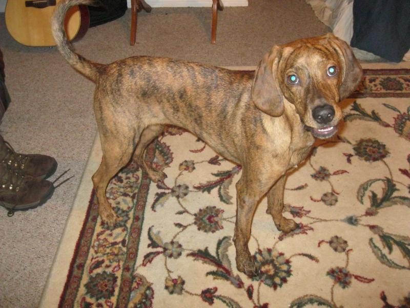 Help To A Identify Dog Breed | Dog Breeds Picture