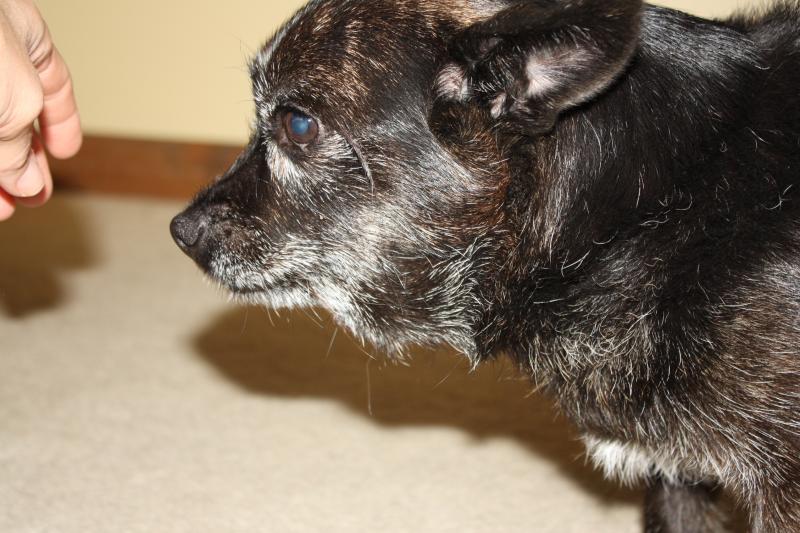 Dog Swelling In Neck Goldenacresdogs