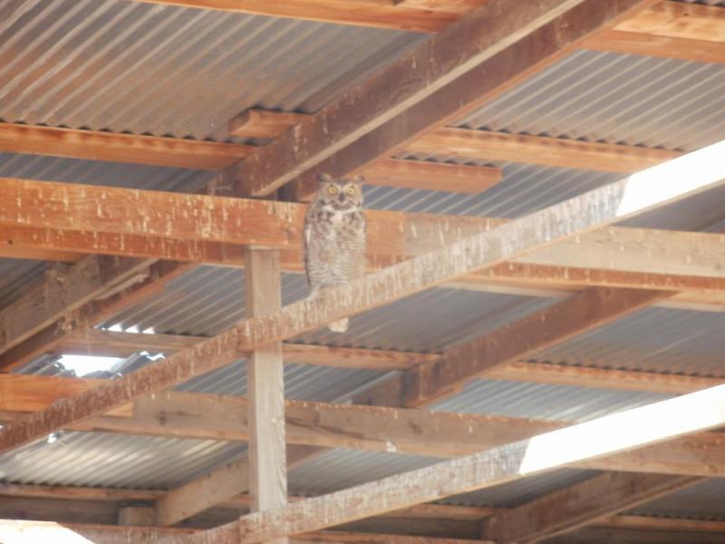 Name:  Owl.jpg Views: 683 Size:  53.1 KB