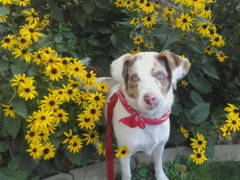 Name:  sunflowerlexi.jpg Views: 1130 Size:  89.4 KB