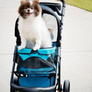 The wandering Fido in his fave stroller